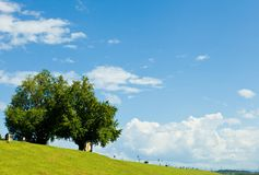 Summer sky and trees in the river bank Royalty Free Stock Images