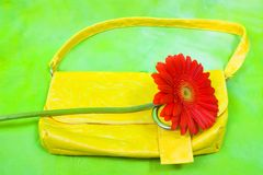 Summer slill life with gerbera Royalty Free Stock Image