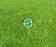 Summer soap bubble Royalty Free Stock Image