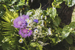 The summer solstice only bloom at night stock photography