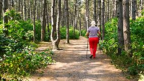 Summer sport - nordic walking. Mature woman hiking in sunny forest. Active people outdoors. stock video footage