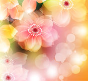 Summer or spring  Royalty Free Stock Images