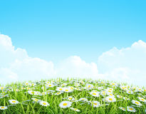 Summer or spring shiny meadow Background. Royalty Free Stock Images