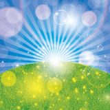 Summer spring background with grass and sunlight Royalty Free Stock Photography