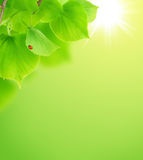 Summer/Spring Concept. Little Red Ladybird sitting on fresh green leaf.Environment concept stock images