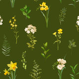 Summer and Spring Floral Background in Watercolor Style. Vintage Field Flowers. Summer and Spring Floral Background in Watercolor Style. Vector Vintage Field Stock Image