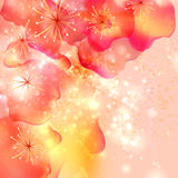 Summer or spring flowers Stock Photo