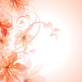 Summer or spring flowers Royalty Free Stock Photos