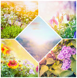 Summer spring flowers collage Royalty Free Stock Image