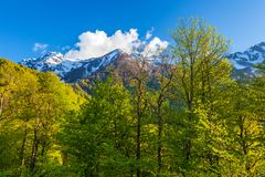 Summer spring forest mountain landscape, Sochi Russia. Stock Photos