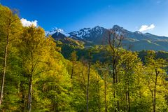 Summer spring forest mountain landscape, Sochi Russia. Stock Image