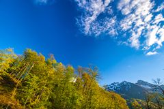 Summer spring forest mountain landscape, Sochi Russia. Royalty Free Stock Photography