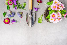 Summer or spring gardening with flowerpot, soil , shovel and plant on gray stone concrete background Stock Photo