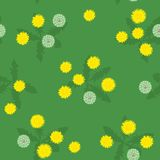 Summer bright yellow and white dandelions seamless pattern. Summer or spring glade of yellow and white dandelions on green seamless pattern Royalty Free Illustration