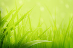 Summer Spring Green. Background royalty free stock photos