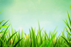 Summer Spring Green. Background stock photography