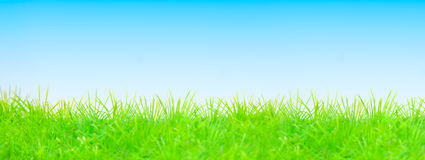 Summer spring green blue. Grass sky background for cards Stock Images