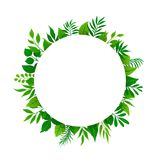 Summer spring green leaves branches twigs plants foliage greenery round circle frame with place for text. Isolated vector illustration Stock Image