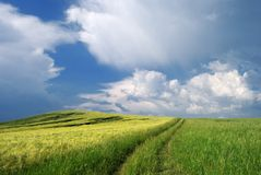 Summer fields with clouds Royalty Free Stock Photography