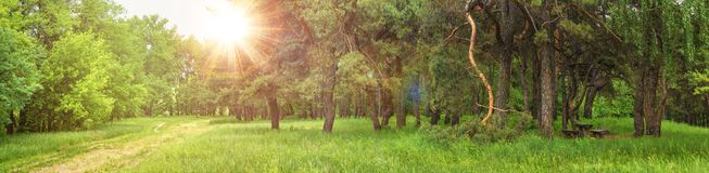 Summer spring landscape - view of the trail and resting place in the forest on a sunny summery day. Banner, huge panorama stock photo