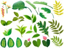 Summer, spring leaves set. Green flat icon. , Isolated on. White background Royalty Free Stock Photos