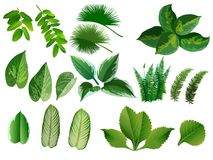 Summer, spring leaves set. Green flat icon. , Isolated on. White background Stock Photography