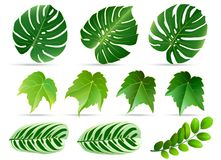 Summer, spring leaves set. Green flat icon. ,  on. White background Stock Images