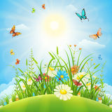 Summer or spring meadow landscape Royalty Free Stock Photo