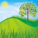 Summer or spring nature background with green tree. And grass, natural landscape vector illustration