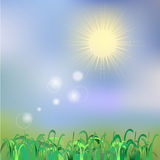Summer or spring vector background. Green grass, blue sky and sun. Stock Photography