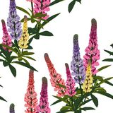 Summer spring wild lupines pink, violet and yellow flowers with green leaves. Light background. Seamless floral pattern. Textile pattern. Field of flowers Stock Images