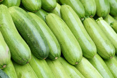 Summer squash. The close-up of summer squash Stock Image
