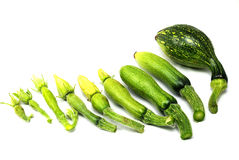Summer squash Royalty Free Stock Images