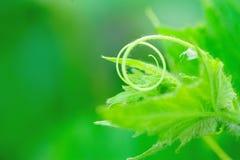 Summer squash flower Royalty Free Stock Image