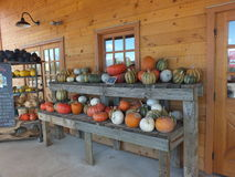 Summer squash and pumpkins ready to sell in Lafayette, Colorado Stock Photos