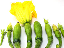 Summer squash and yellow flowers Stock Photos