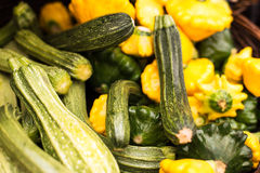 Summer squashes (pattypan squash and zucchini) in a basket at fa Royalty Free Stock Image