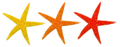 Summer starfish Royalty Free Stock Images