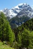 Summer Stelvio Pass (Italy) Royalty Free Stock Photography