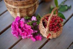 Summer still life Stock Photo