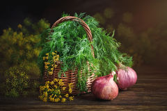 Summer still life with fresh dill and onion. Royalty Free Stock Images