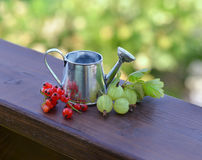 Summer still life with red currant, gooseberries and watering can Royalty Free Stock Photos