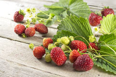 Summer still life with strawberries  Royalty Free Stock Photography