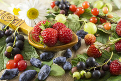 Summer still life with various berries Royalty Free Stock Photos