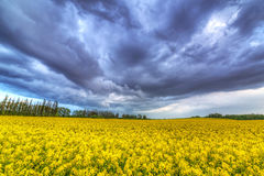 Summer storm over the repeseed field Stock Photos