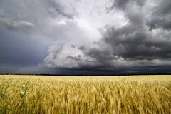 A summer storm rolls over the Missouri fields. A summer thunderstorm rolls over the Missouri wheat fields on a beautiful, scenic day stock photography