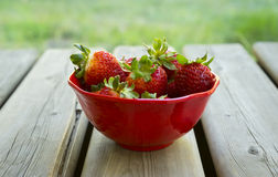 Summer Strawberries. Lovely red strawberries in a summer, outdoor setting Royalty Free Stock Photo