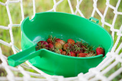Summer strawberry Royalty Free Stock Photos