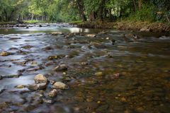 Summer Stream. The Fox River in Southern Wisconsin stock image