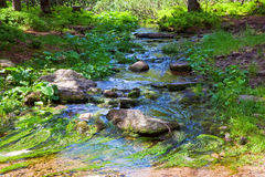 Summer stream with moss covered stones Royalty Free Stock Images
